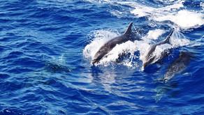 Abenteuer Azoren, São Miguel: Paradies für Wanderer & Naturliebhaber - Teil 2