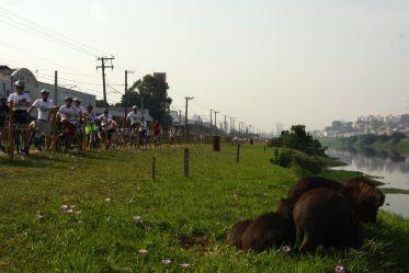 Capivaras descansando no Rio Pinheiros / JB Carvalho - Shimano
