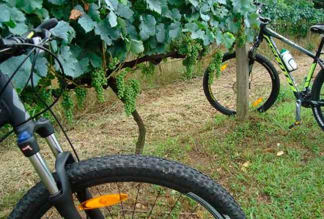 De bike pelos parreirais (Dall'Onder / Divulgação)