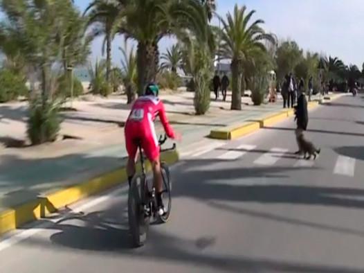 Sagan quase caiu ao desviar do pedestre e seu cachorro / Reprodução Tv