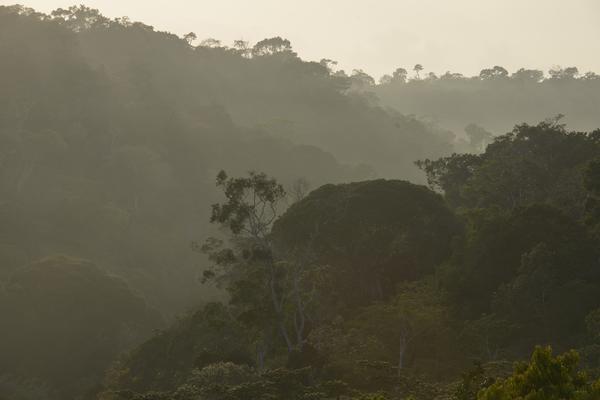 Visual do PNPB (Parque Nacional Pau Brasil / Divulgação)