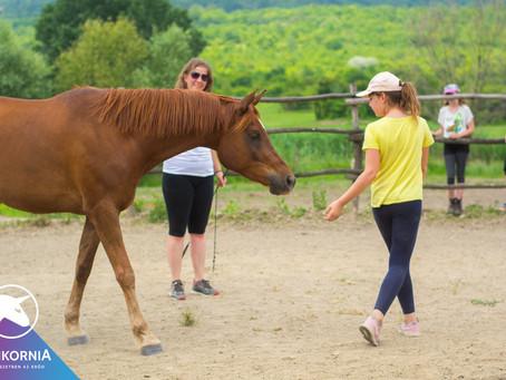 A lovak, mint tanítók