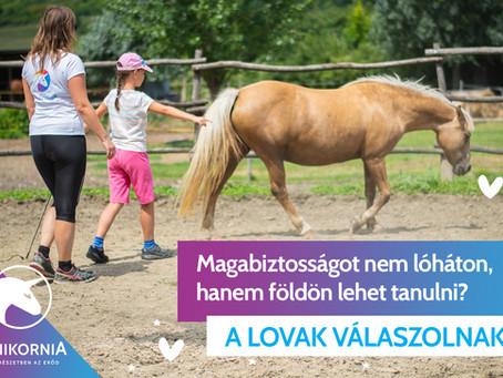 Magabiztosságot nem lóháton, hanem földön lehet tanulni? – A lovak válaszolnak
