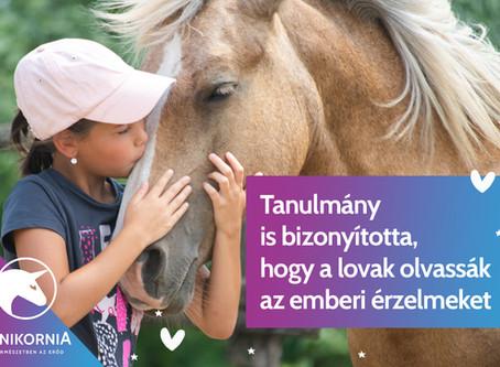 Tanulmány is bizonyította, hogy a lovak olvassák az emberi érzelmeket