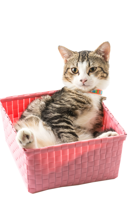 gato2.png
