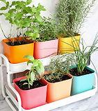 indoor-garden.jpg
