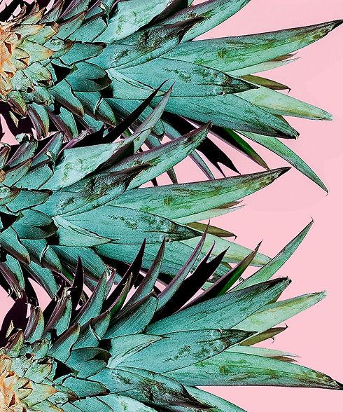 Pineapple_Husks.jpg
