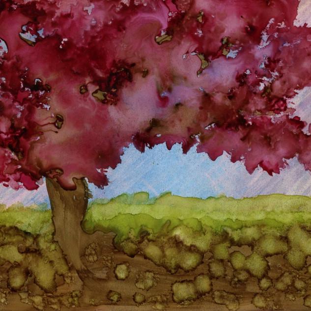 Cherry Blossom Blossom