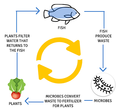 Aquaponic Life Cycle
