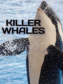 Killer_Whales.jpg
