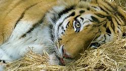 The Zoo- Covid 19 Animals.jpg