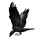 jackdaw_stock_by_frank_1956-d5tol6h.png