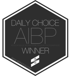 2019 AIBP Daily Choice.png