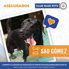 post-asegurados-sao-gomez.jpg