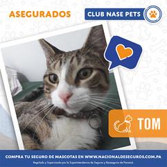 tom.jpg