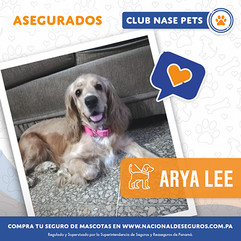 Aryaa-Lee.jpg
