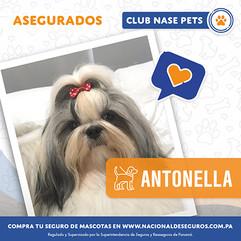 Antonella.jpg