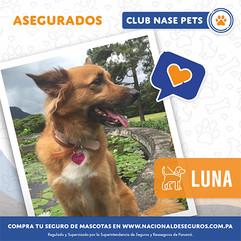 Luna-(1).jpg