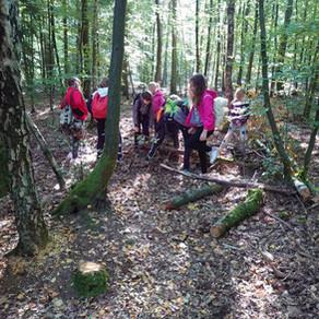 Landeswaldtag in Torgelow
