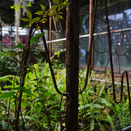 Tom Gaskins' Cypress Knee Museum