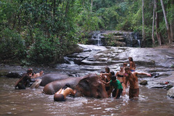 Bathing the Elephants