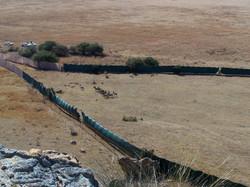 Zebra Capture