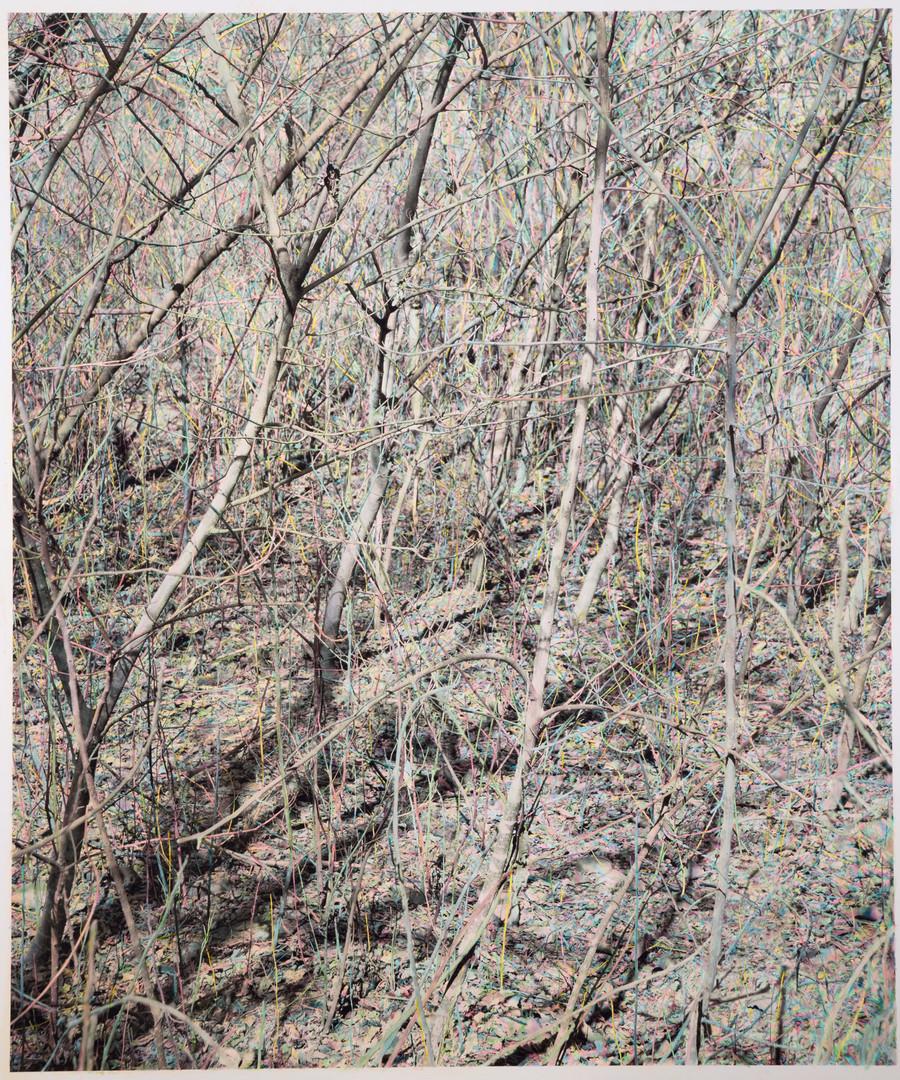 正午的树林 | 2018年 | 摄影绘画 | 138×163cm