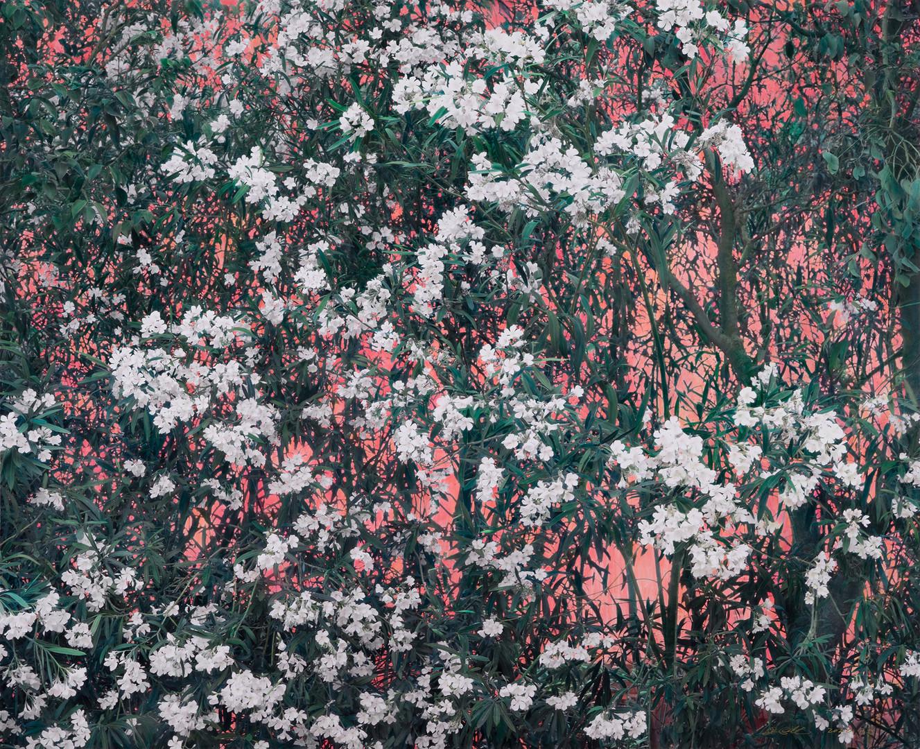 念小黑 | 2020年 | 摄影绘画 | 150×189cm