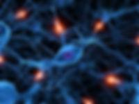 Neurons-1-e1399492553116.jpg_(500×375).j