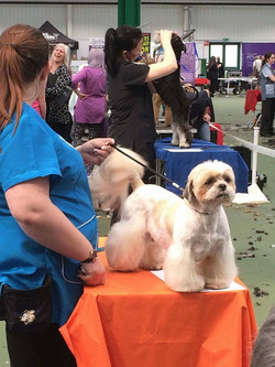 Me and Harley at Mastergroom 2016