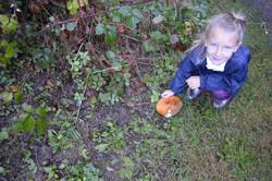 Oak habitats (4)