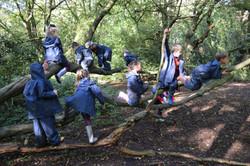 Oak habitats (16)