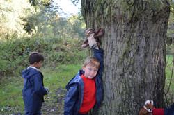 Oak habitats (25)