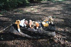 Oak habitats (5)