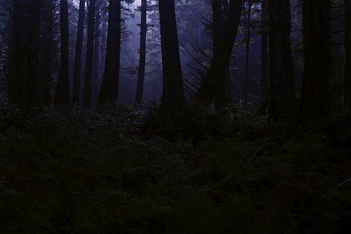 Quitter la forêts des peurs