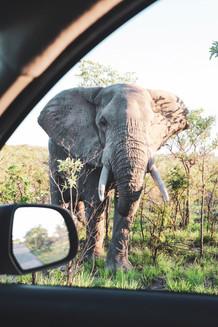 southafrica2.jpeg