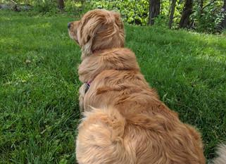 "Sunny's ""Dog Long Days"""