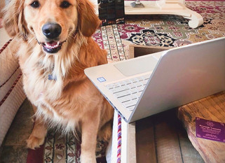 Sunny the shop pup is blogging!