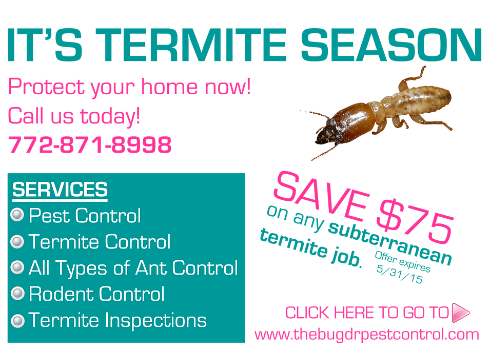termite control pest control ant control port st lucie fort pierce stuart vero beach