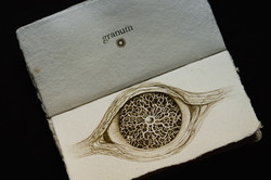 SENTENTIA granum