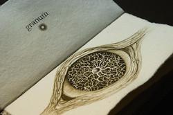SENTENTIA granum (fragment)