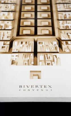 BIVERTEX convexus (fragment)