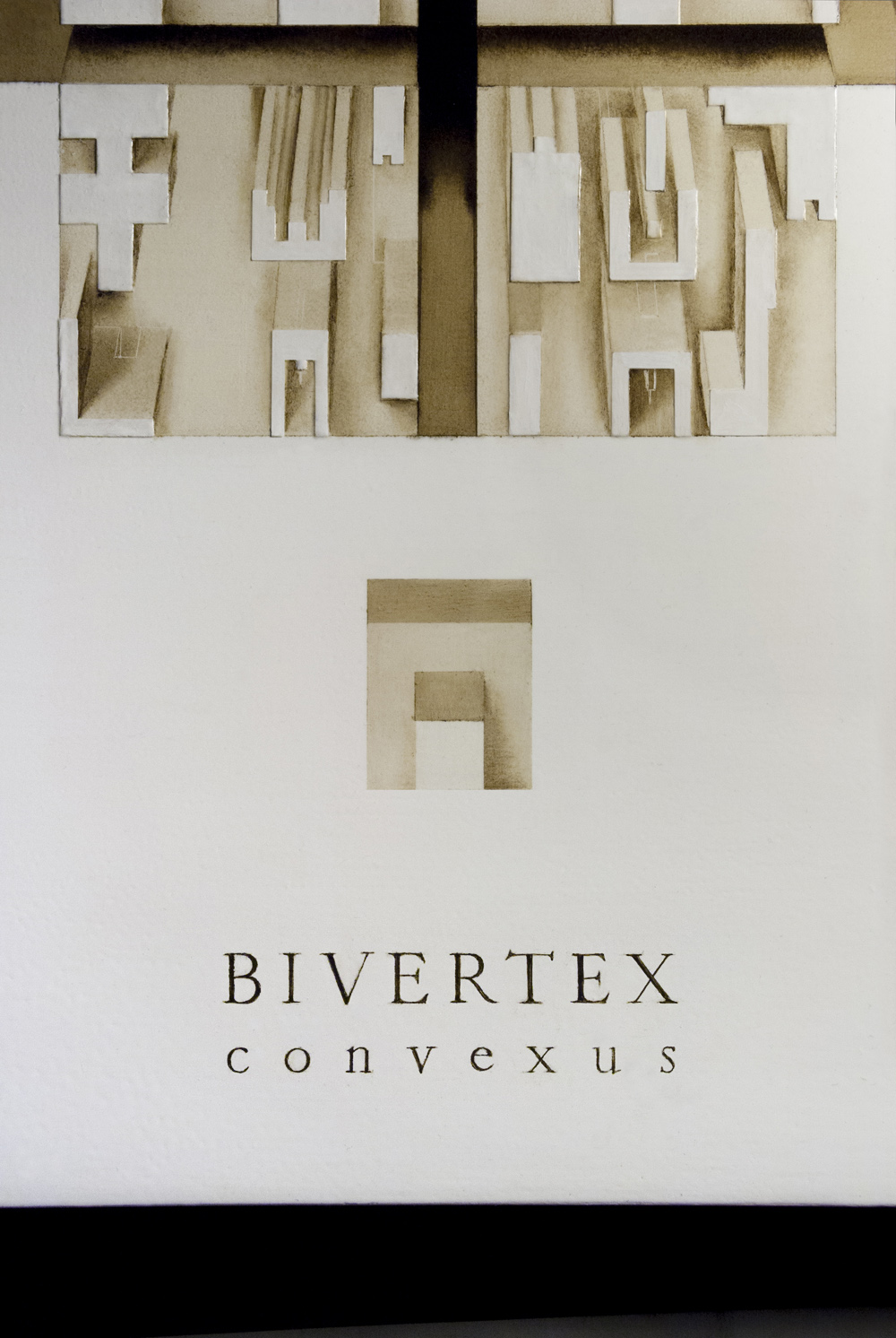 BIVERTEX convexus (fragment)