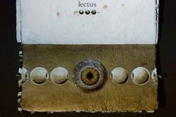 SENTENTIA - lectus