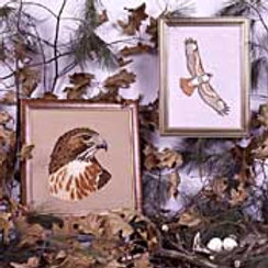 Red-Tailed Hawk | Crossed Wing Collection