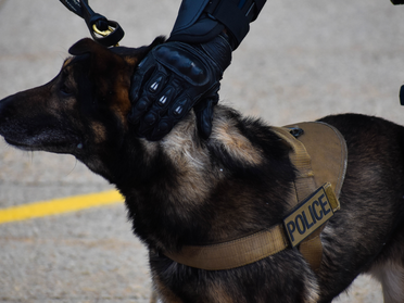 Governor DeSantis signs bill allowing injured K9s to be transported, get treatment from EMTs