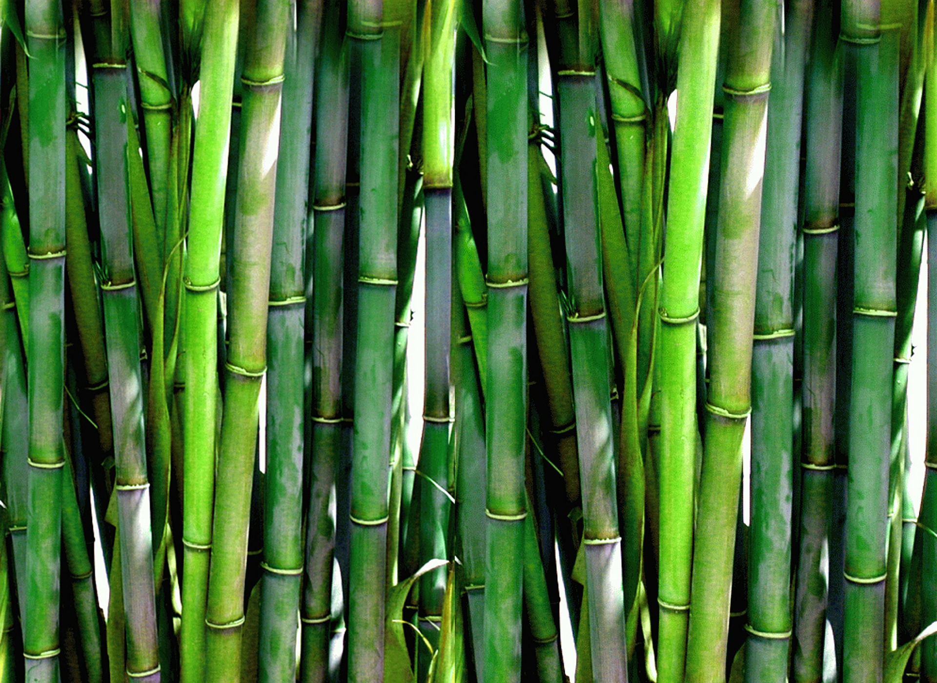 Bamboo Kauai|Bamboo Straw|Hawaii| Reusable| Eco friendly|Bamboo|