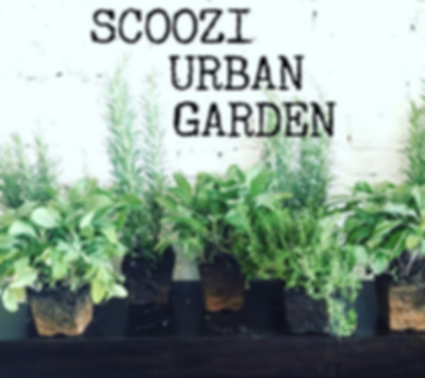 Scoozi's Urban Garden