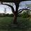 Thumbnail: Tree Cover