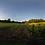 Thumbnail: Split field at dawn